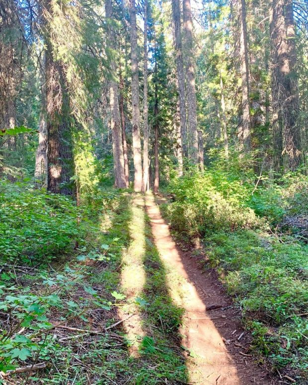 The sounds of the trail